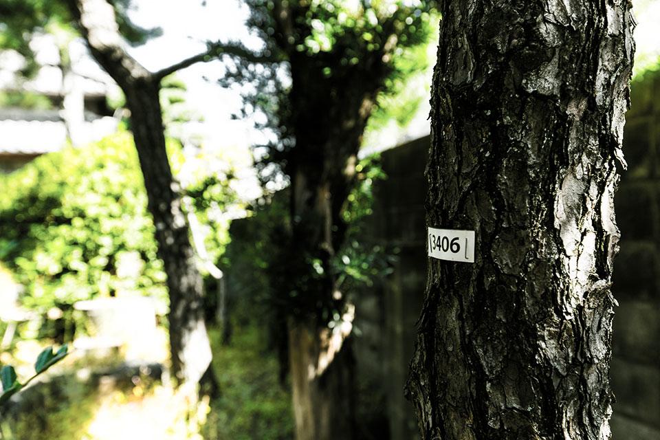 三畏閣-樹木ナンバリング