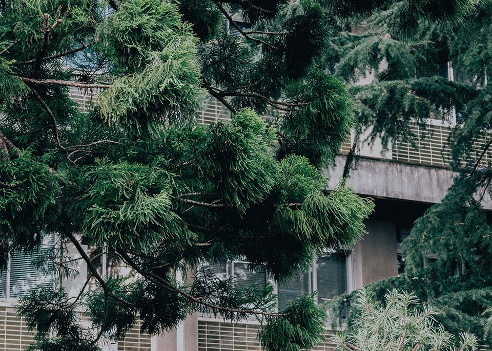 農学部-並木3